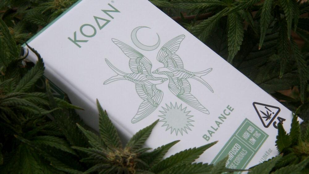 Koan Cordial Box in Cannabis Plant